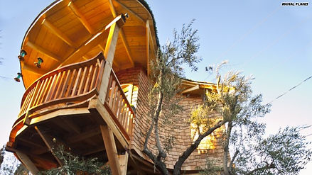 curved-roof-treehouse