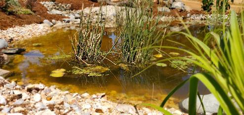 backyard-oasis-koi-fish-pond-waterfall-builders[1].jpg
