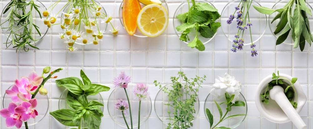 Verschiedene Kräuter, Salbei, Kamille, Rosmarin, Basilikum, Zitronen