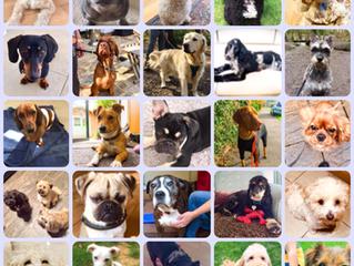 Dog Behaviourist Days