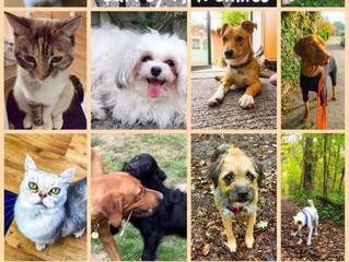 Just some of the cats and dogs we love