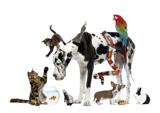 The Surrey Ark Claygate, Effingham, Dog Walker, Pet Sitter, House Sitter, puppy sitter, small mammals, cats, guinea pigs, birds, snakes, parrots, #thesurreyark #puppycare #claygate #housesitter #thamesditton #cobham