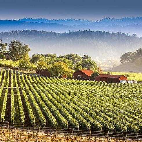 SFO-napa-valley-prenez-la-route-des-vins