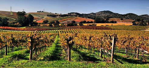Nappa-Valley-Sonoma.jpg