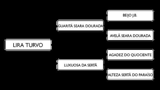 LIRA TURVO.png