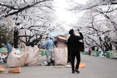 Tokyo-Sakura-Morning-Ueno-Park-Garbage.j