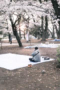 Sakura Festival in Tokyo Ueno Park People Sleeping outside