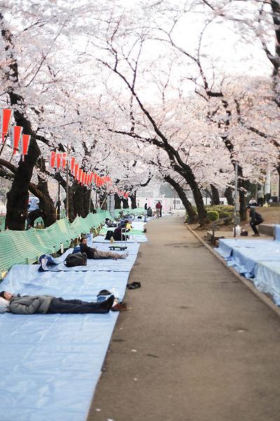 Sakura Festival in Tokyo Ueno Park Sleeping Outside