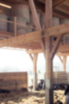 Wagyu_Stall_Huemer_Schrattenecker_Interior_cattle_Gruber
