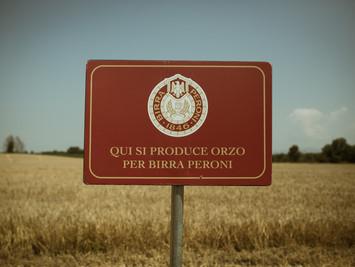 Tracciabilità in blockchain del malto 100% italiano di Birra Peroni