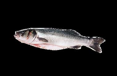 Pesce scontornato.png