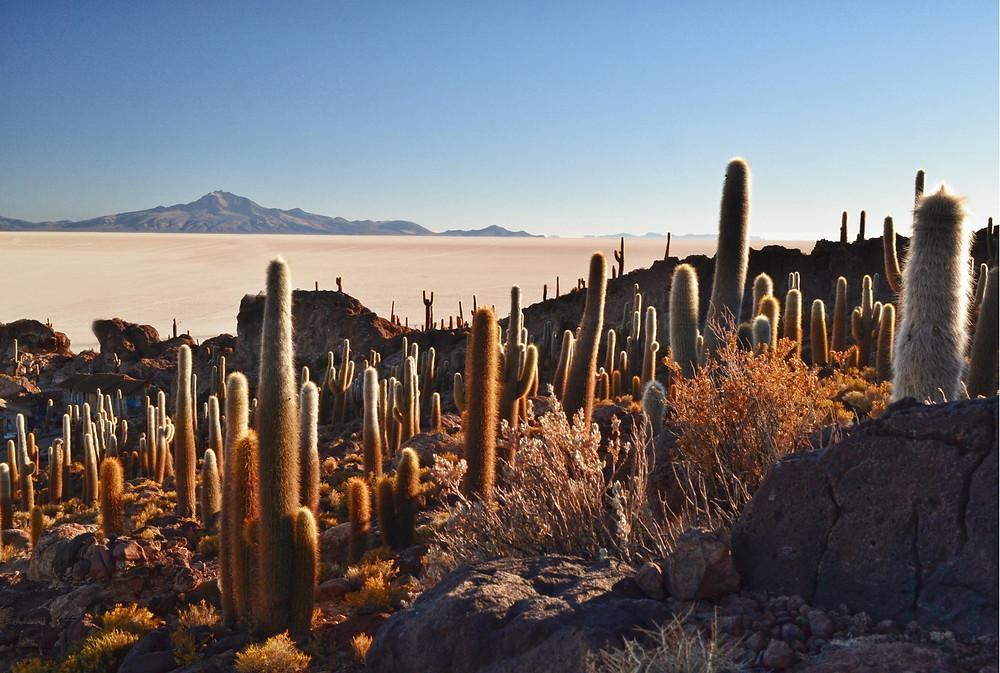 Salares-boliviano-uyuni-isla-incahuasi-deserto-atacama