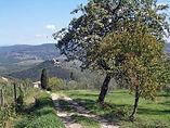 Da Firenze a Siena | Trekkilandia | Il Chianti