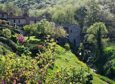 La via romea del Chianti da Firenze a Siena e l'Homo Viator
