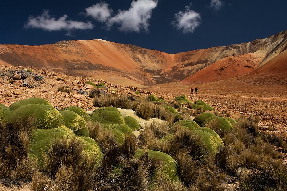 altopiano-andino-deserto-cileno-atacama-suriplaza