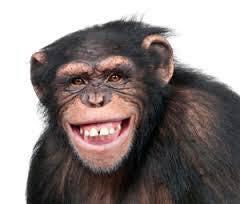 One Monkey...