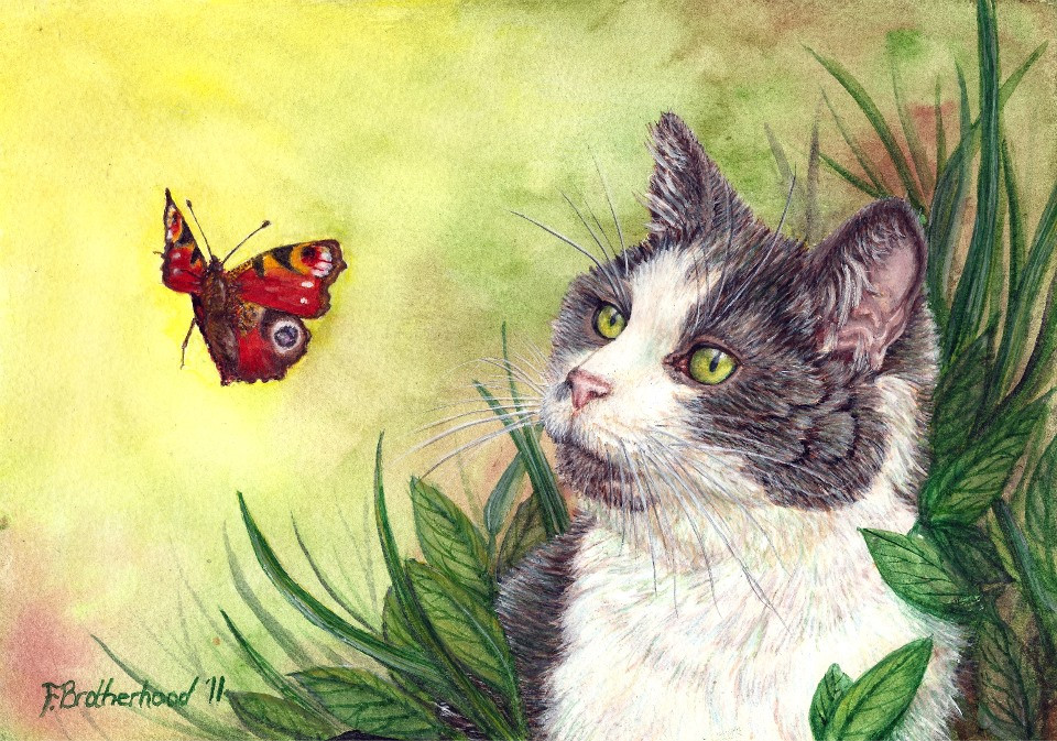 Cat and butterfly (2011)