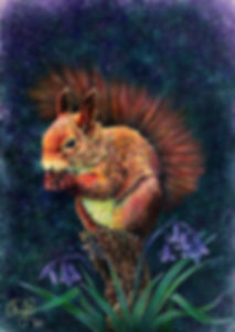 Squirrel in bluebells by Fay Brotherhood
