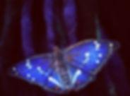 Purple Emperor hair clip