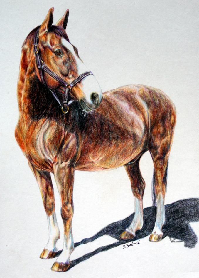 Bay horse by Fay Brotherhood