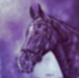monochrome horse in purple by fay brothe