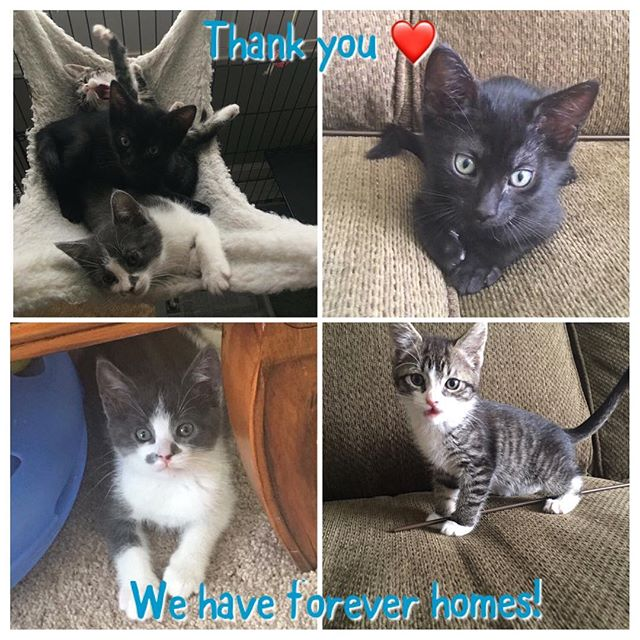 Placing sweet socialized feral kittens in loving homes. TNRing the adults