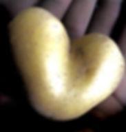 Kartoffelherz.jpg