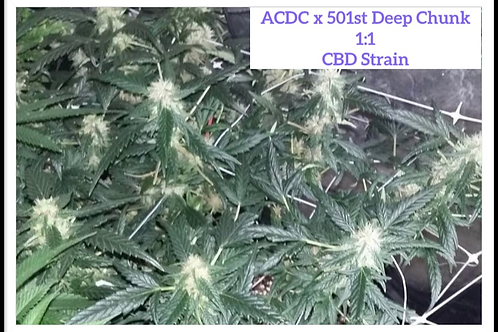 CBD 1:1 Clear Vision 20:20 (6 photo regs)