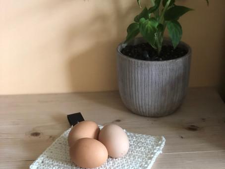 Photo Transfer onto an Easter Egg