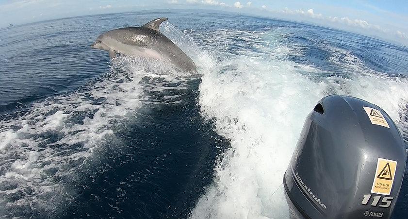 Dolphin%20behind%20boat2_edited.jpg