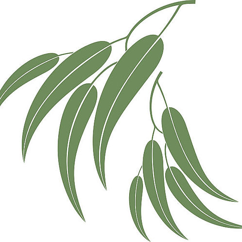 Eucalyptus Pure Essential Oil Blend