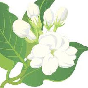 GardeniYum! Sold Frangrance