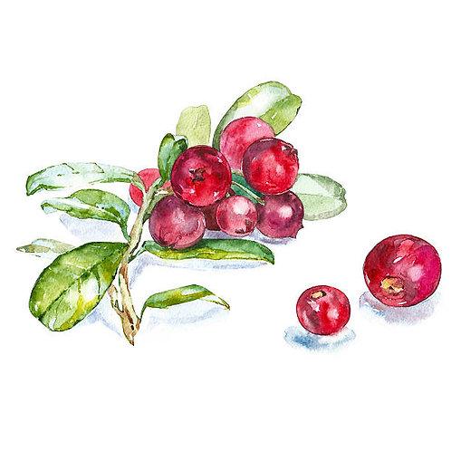 Cranberry Bliss Lip Balm
