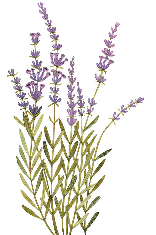 Lavender Pure Essential Oil Blend