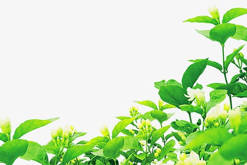 Tea Tree Pure Essential Oil Blend