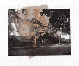 drevo1.jpg