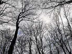 foto bomen lucht.jpg
