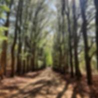 foto planken wambuis groene blaadjes.jpg