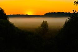 Belavezha Forest (6)