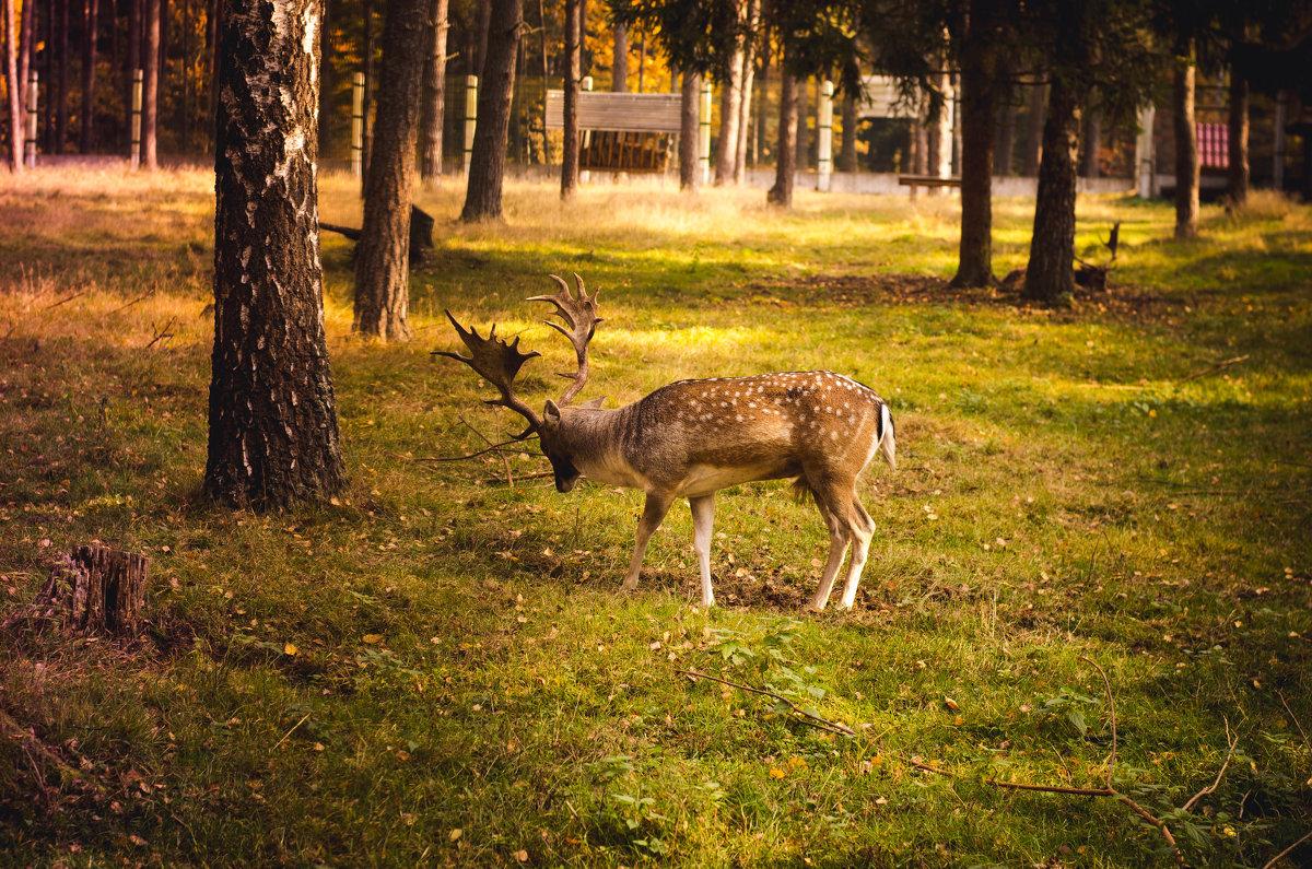 Belavezha Forest (1)