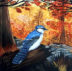 Blue Jay Life