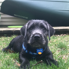 Puppy Skipper