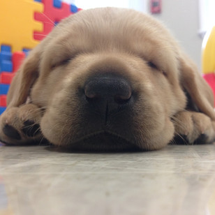 Sleepy Archie