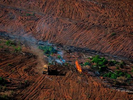 A ENGENHARIA DO AGRO – PADRÃO DE OPRESSÃO PRODUTIVA–A REPUBLICA OLIGARQUICO-FUNDIÁRIA RETOMA O PODER