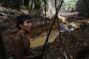 Primeiras conexões: pandemia e destruição ambiental