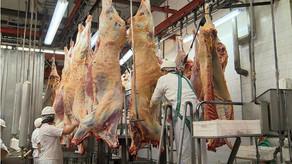 Regras internacionais para fiscalização de carne em frigoríficos a saúde pública no Brasil