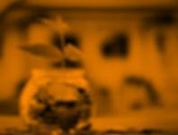 shutterstock_252063856 (1).jpg