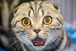 Кастрация стерилизация кошек и собак Киев Позняки