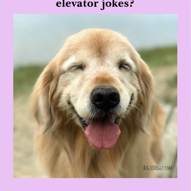 Funny Golden Retriever Dog Elevator Joke Postcard