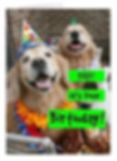 golden-retriever-dog-birthday-card.jpg